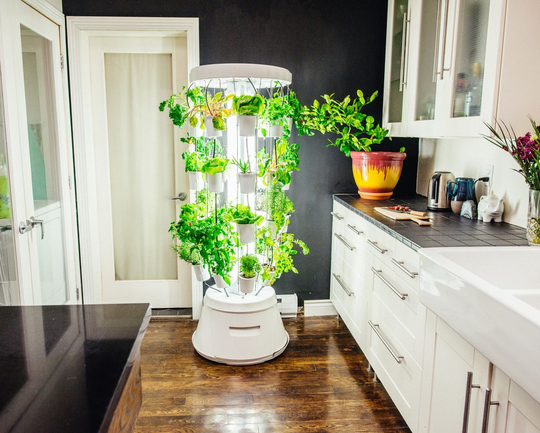Our Favourite Indoor Gardening Systems Kertészkedés