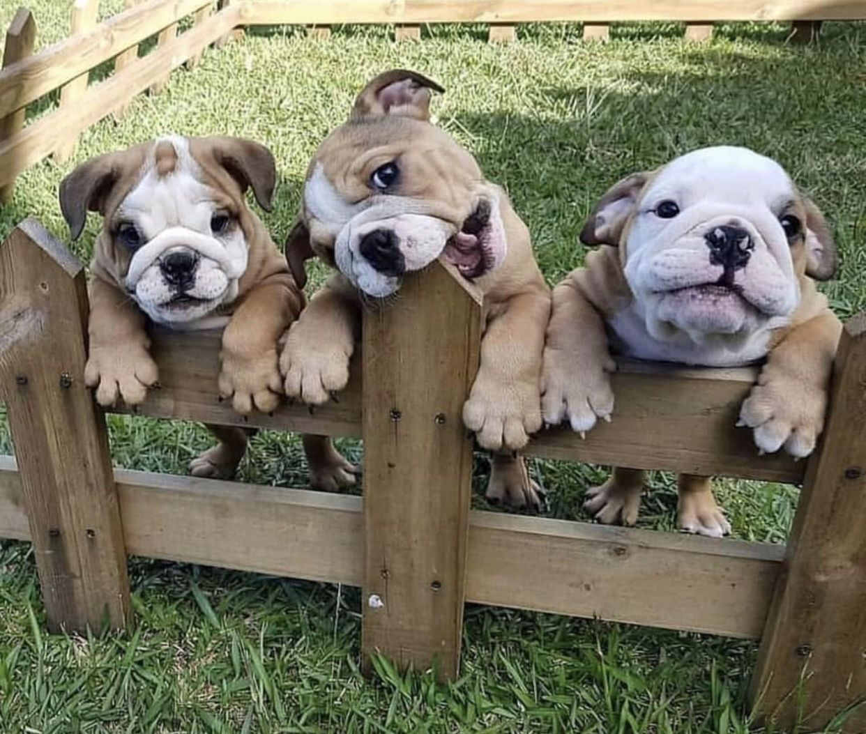 Pin By Hope Dickerson On Mississippi State Bulldogs Cute Animals