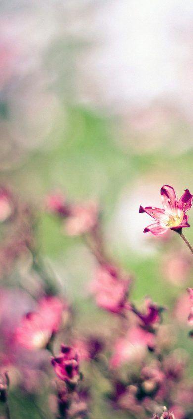 Ideas For Flower Backgrounds Iphone Xr Wallpaper images в