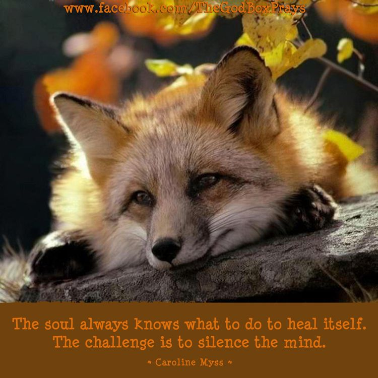 The soul always knows what to do to heal itself. The challenge is to silence the mind. ~ Caroline Myss ~