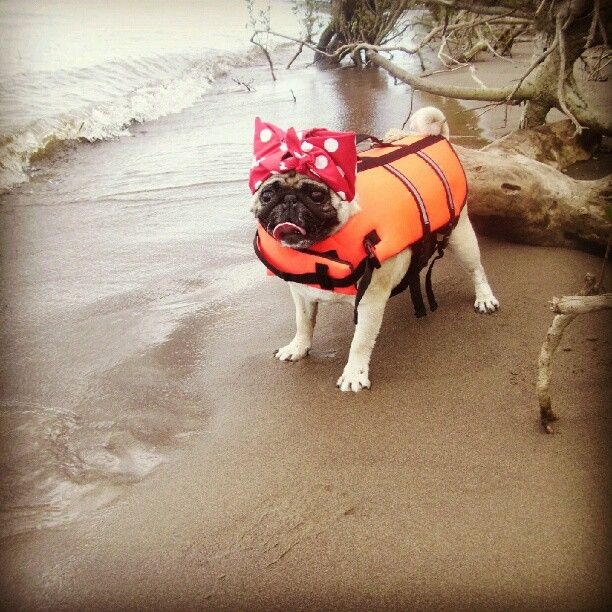 Rosie Pug Riveter Safety First Pug Love Cute Animals Funny