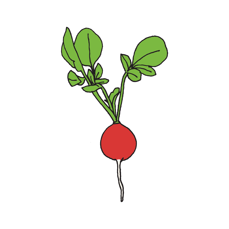 Radish Vegetable Drawing Rock Painting Patterns Vegetable Cartoon