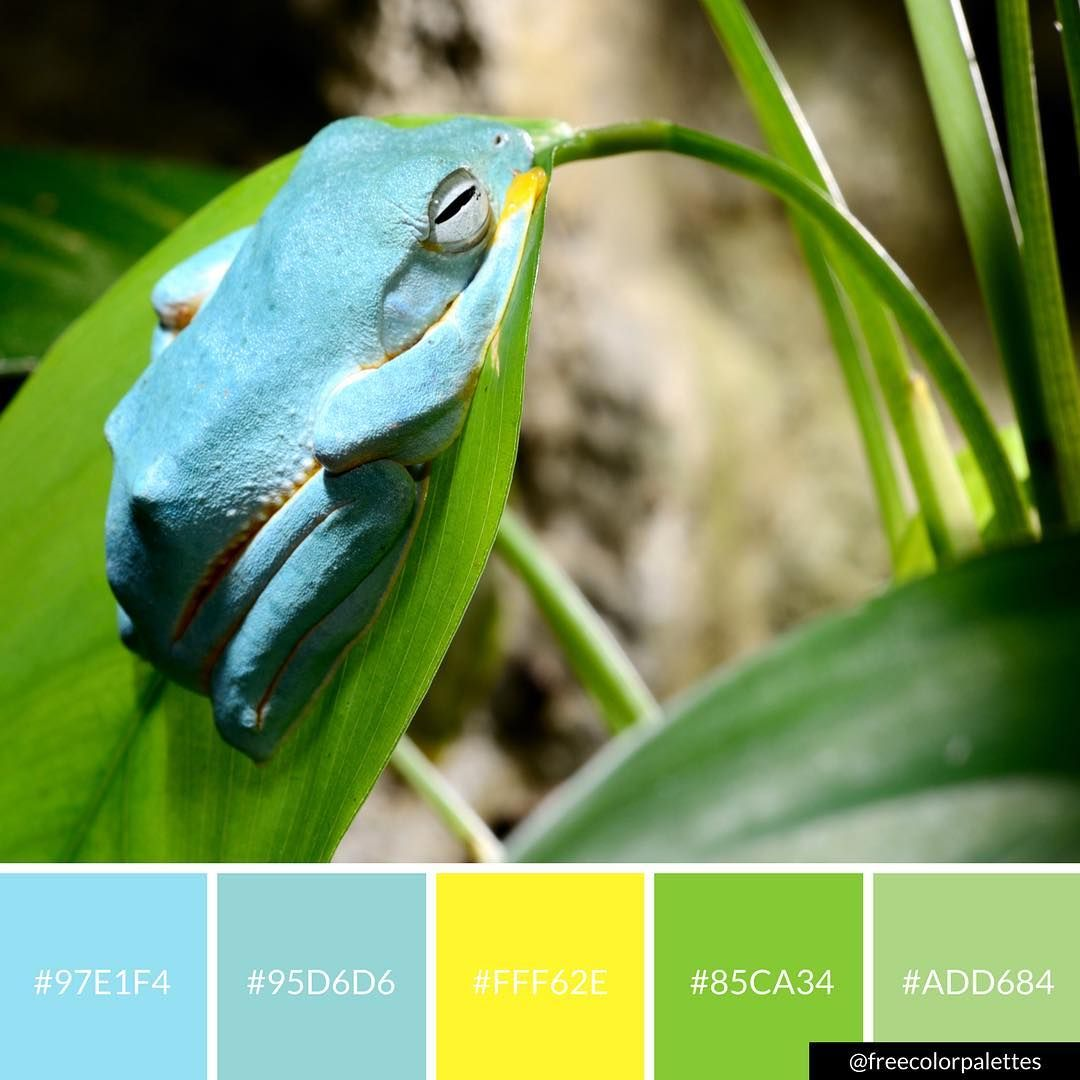 Frog | Spring | Blue and Green |Color Palette Inspiration. | Digital ...