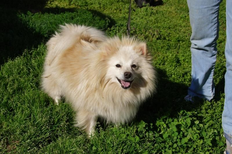 Adopt Chelsea On Dogs Chelsea Dog Cat