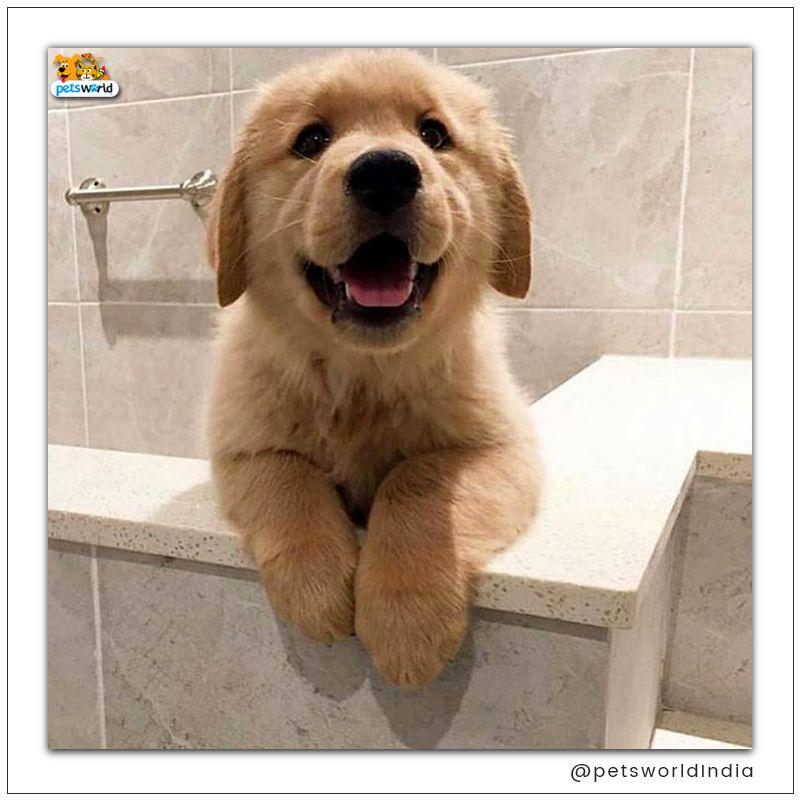 Momma Said It S Bath Time Petsworld Petsworld