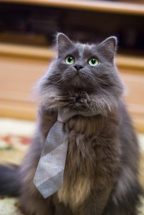 Click the Photo For More Adorable and Cute Cat Videos and