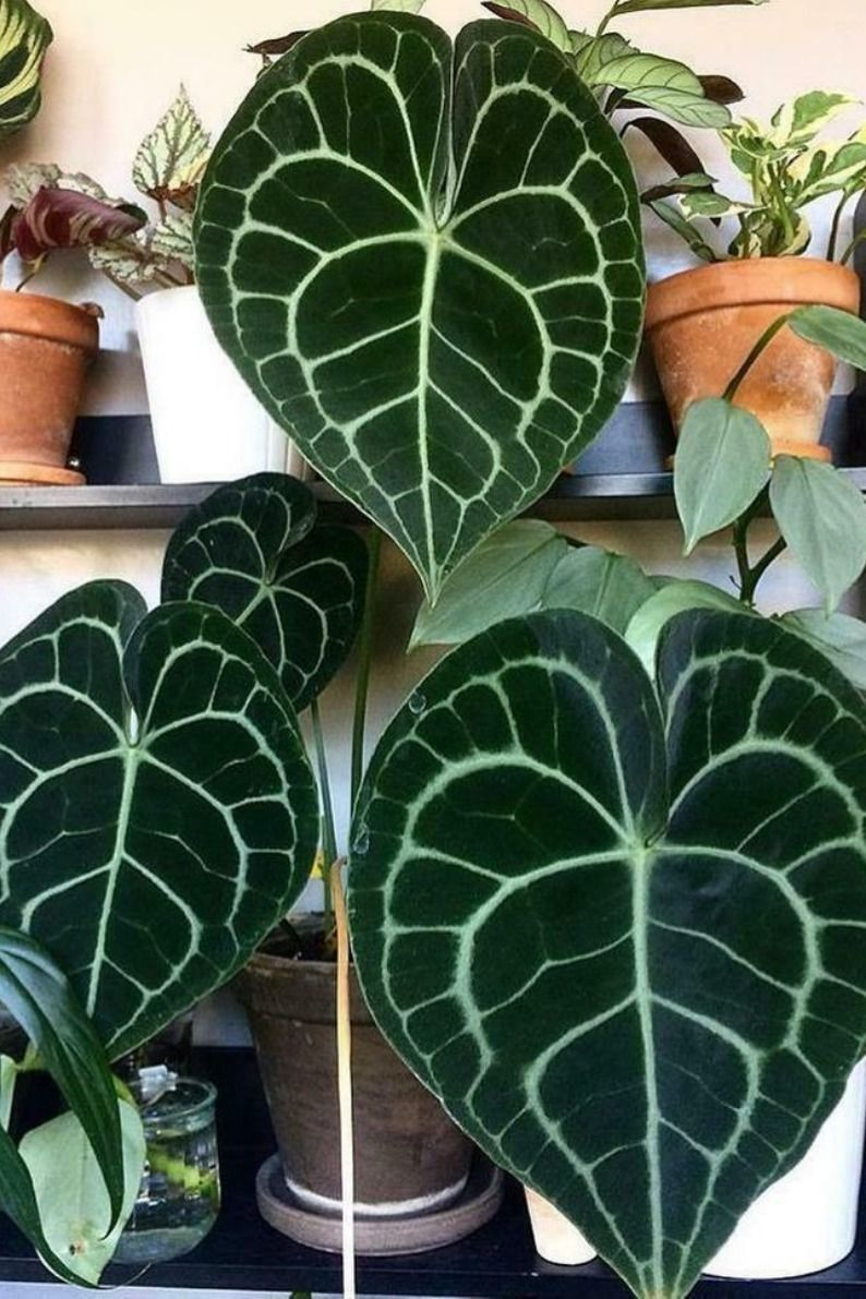 Pin On Indoor House Plants