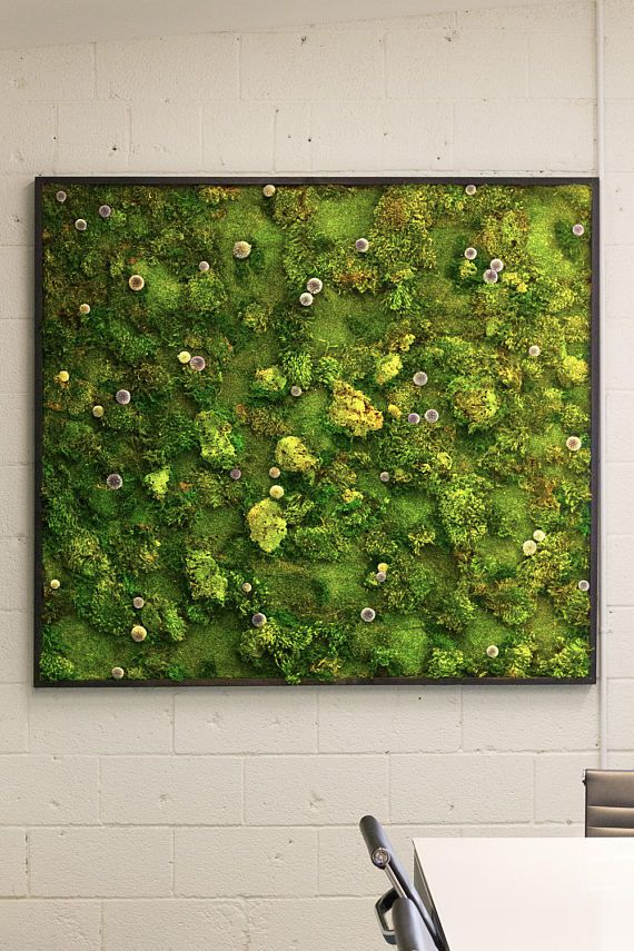 Moss Wall Art Work REAL Preserved No