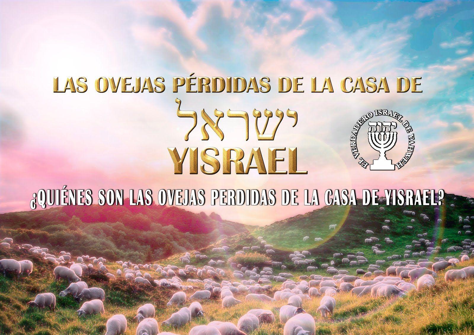 Quienes Son Las Ovejas Perdidas De La Casa De Yisrael Con