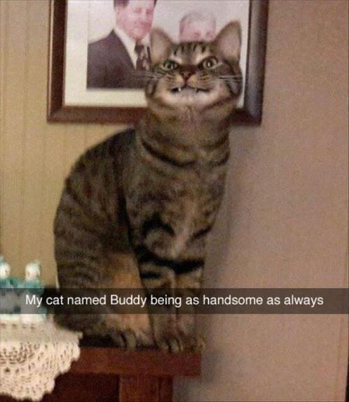 Photo of Funny Pictures Of The Week –