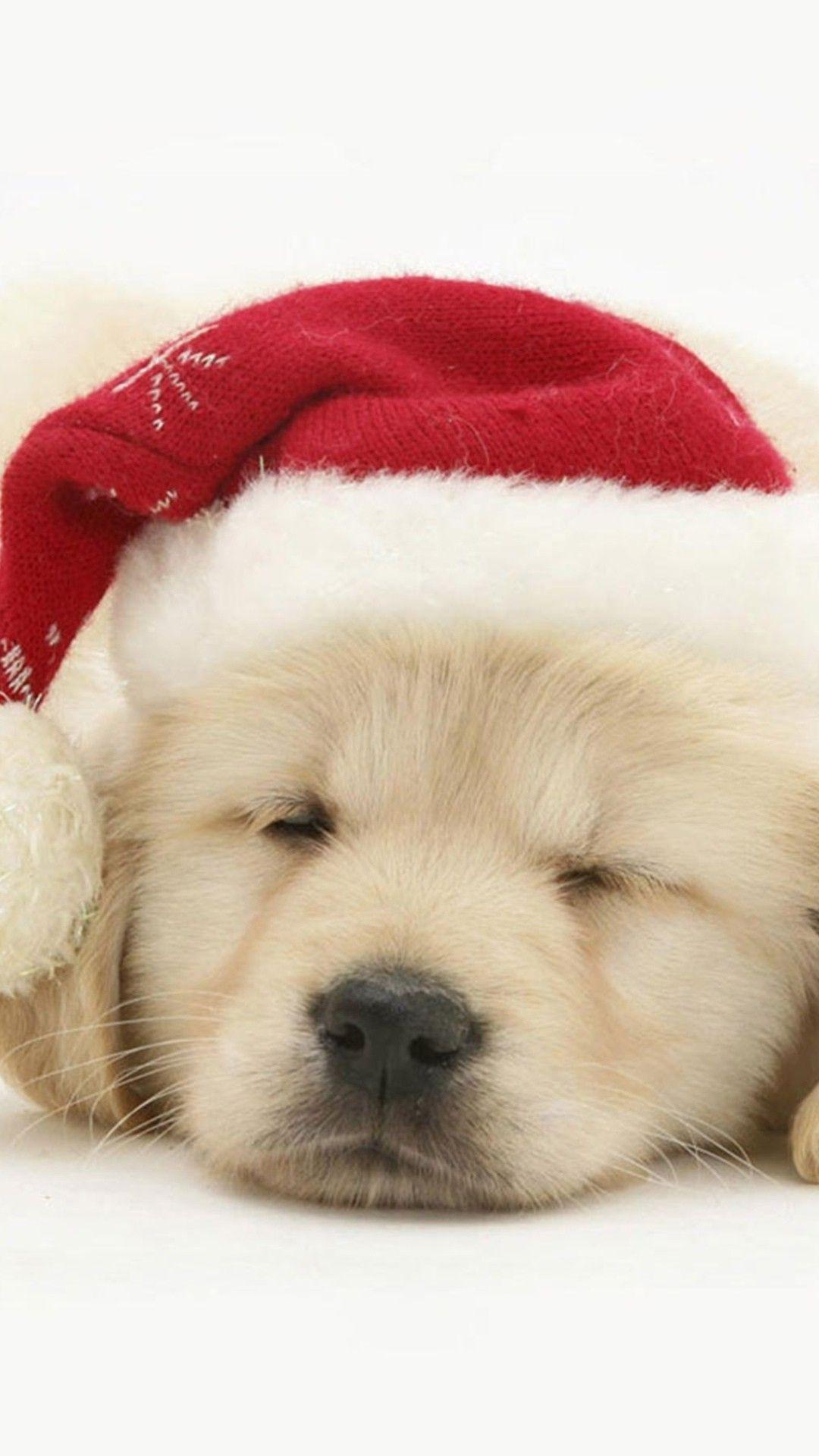 2014 Christmas Dog Santa Iphone 6 Plus Wallpaper 2014 Christmas