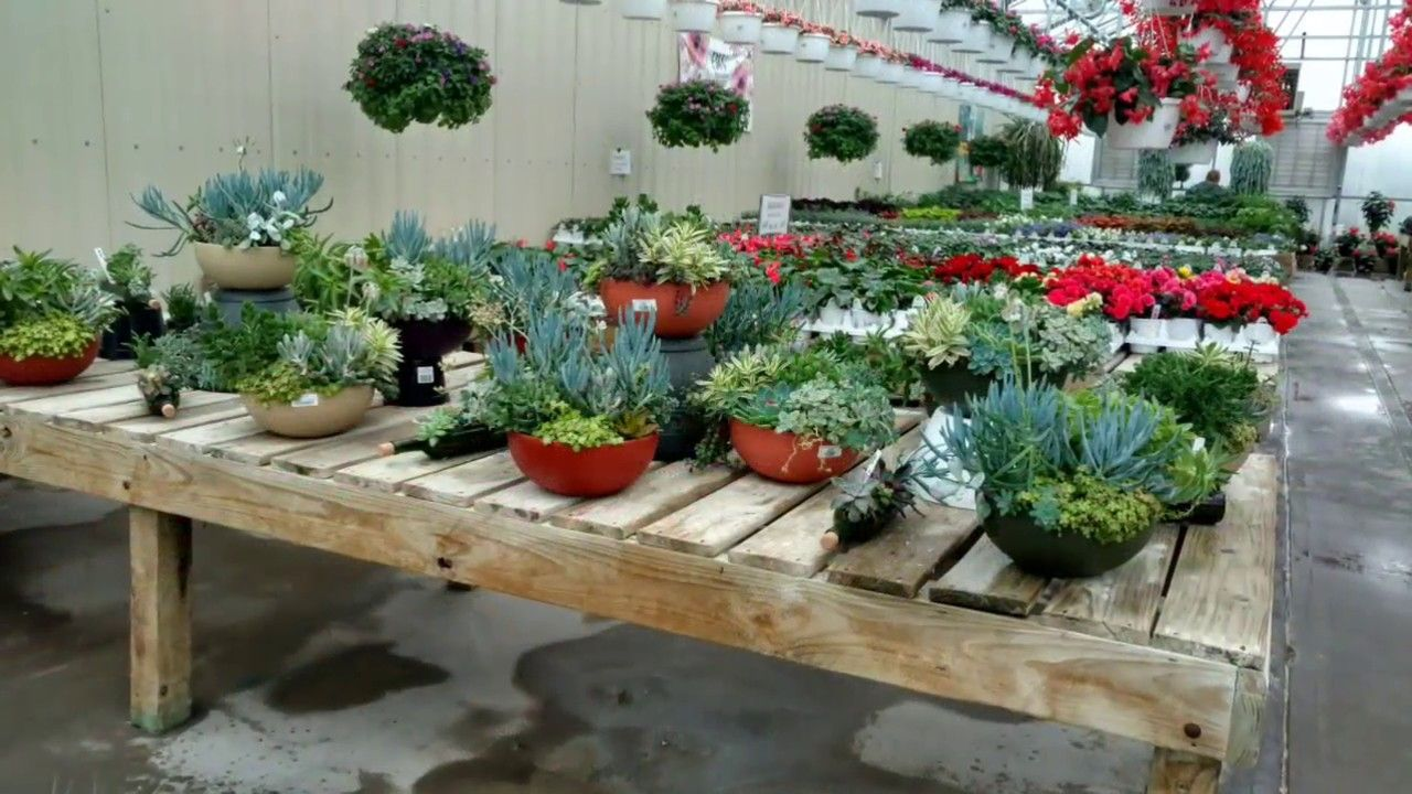 Canoyer country greenhouse photos griswold iowa