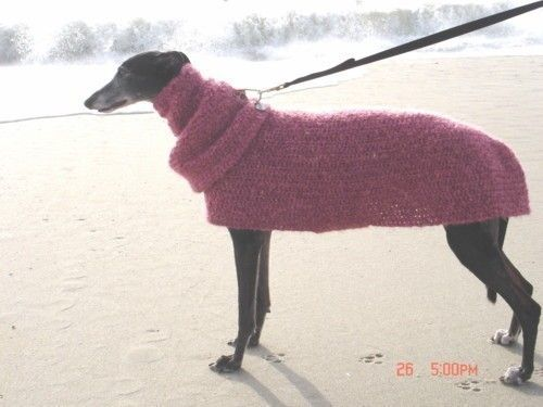 Quick and Easy Greyhound Dog SWEATER Crochet Pattern with SNOOD PDF ...