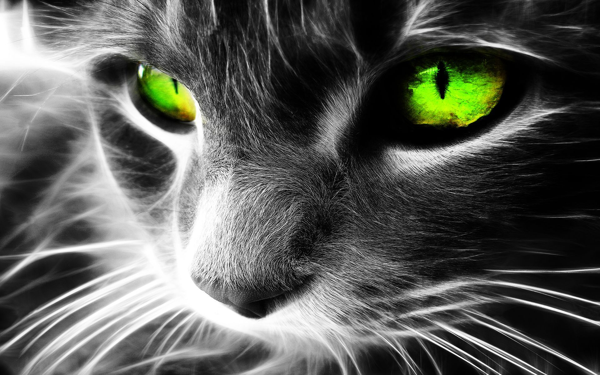 Really Beautifull Fond D Ecran Chat Chats Et Chatons Cool Cats