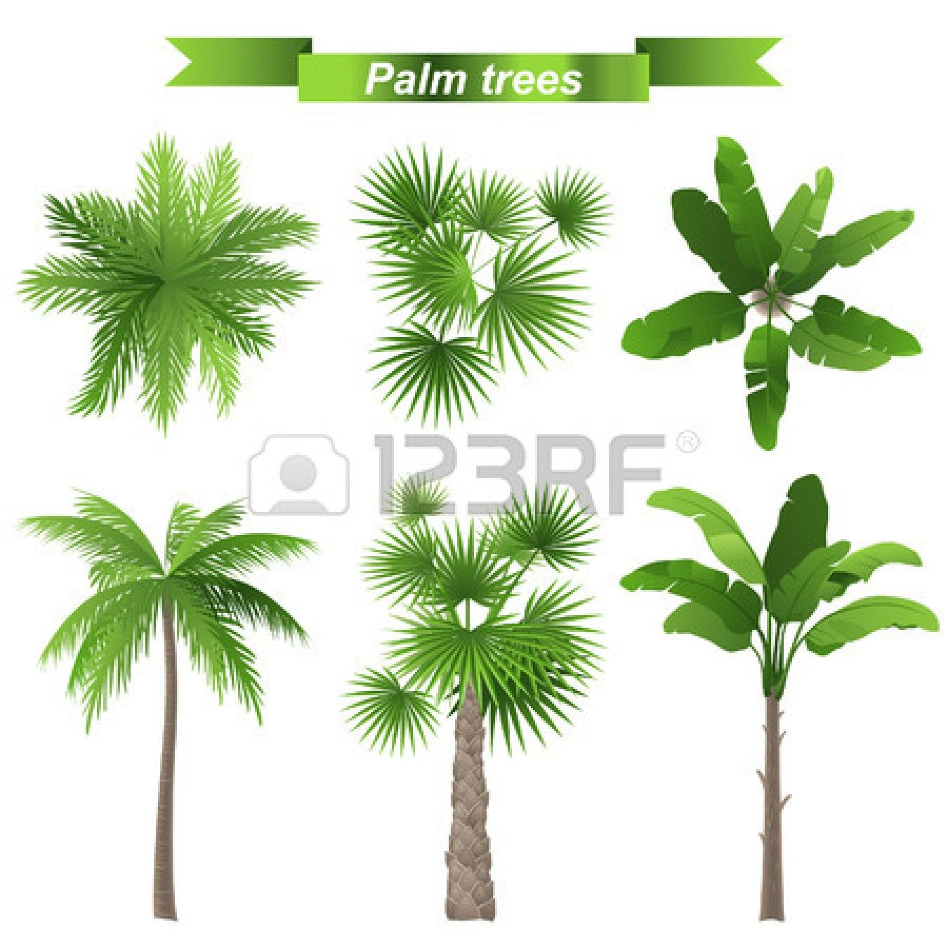 Stock Photo Pinturas De Palmeiras Desenho Palmeira E Arvores