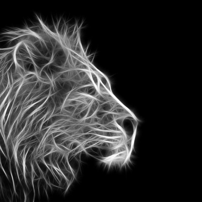 1080p Hd Lion Wallpaper Black And White High Quality Desktop Iphone And Android Background And Wallpaper A Lion Wallpaper Animal Wallpaper Black And White
