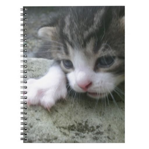 Mountaineer Kitten Notebook!  #Zazzle #Store #Cute #Cat #Kitten #Gift #Present #Customize http://www.zazzle.com/conquestkitty*