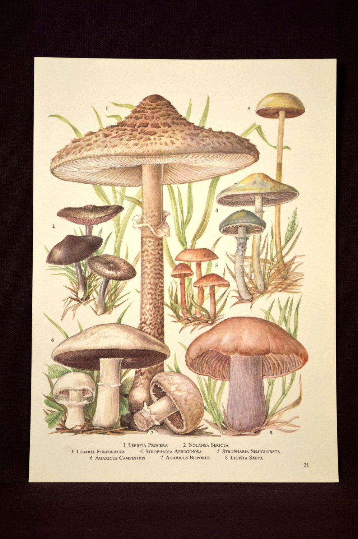 Mushroom Print Nature Wall Art Plant Print Botanical | Pinterest ...