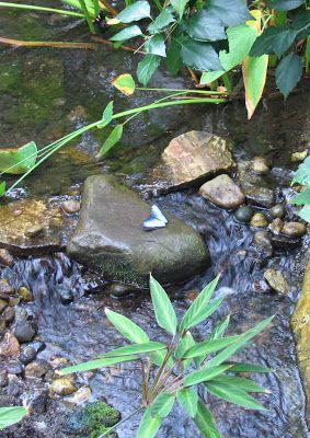 b754485a811f0c3c692c841a61659add - Meijer Gardens Butterfly House Grand Rapids