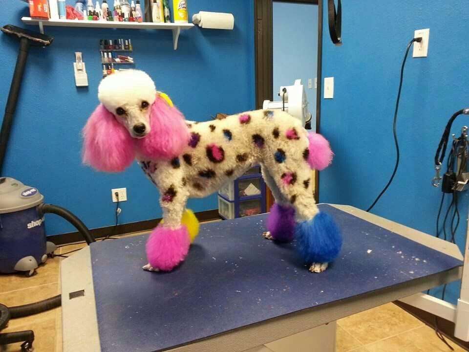 Leopard Poodle Pet Resort Creative Grooming Pets