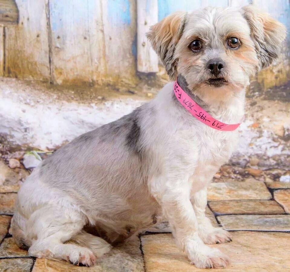 Puppies for adoption colorado springs