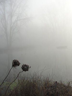 Foggy weather (Esther from the sticks)