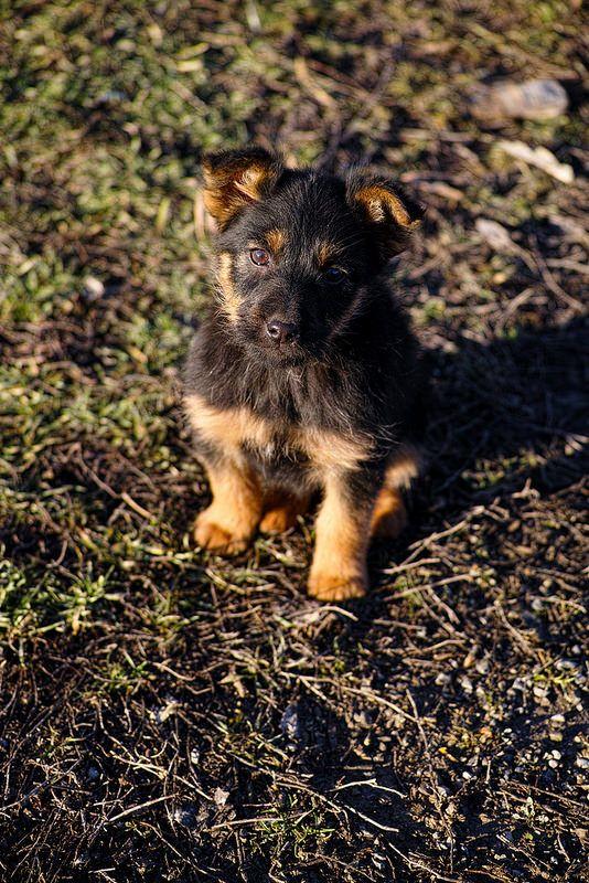 Sigma DP3 Merrill Blog: fotogenerell.wordpress.com