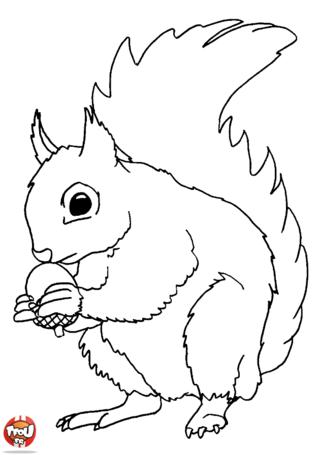 Coloriage ecureuil et sa noisette th me la for t - Noisette dessin ...