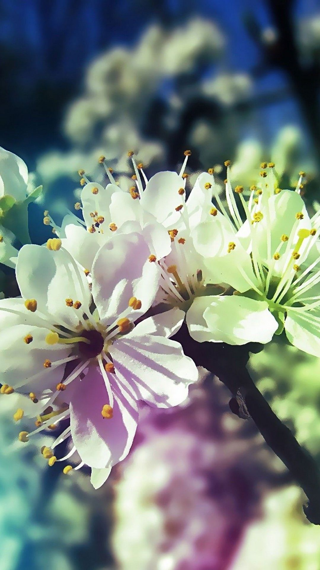 Spring Season Phone Backgrounds Best HD Wallpapers