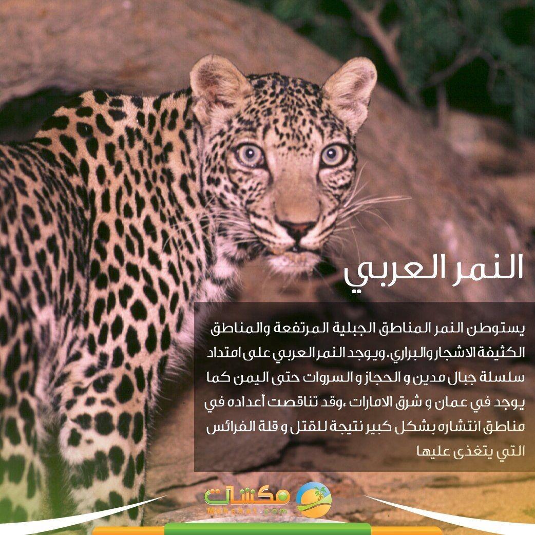 النمر العربي Phone Wallpaper Pink Panther Phone Wallpaper