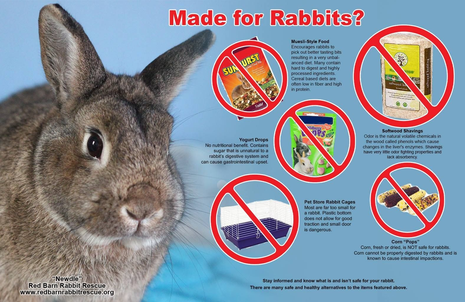 Just Because It S In The Store Doesn T Mean Its Safe Rabbit Cages Rabbit Rabbit Care