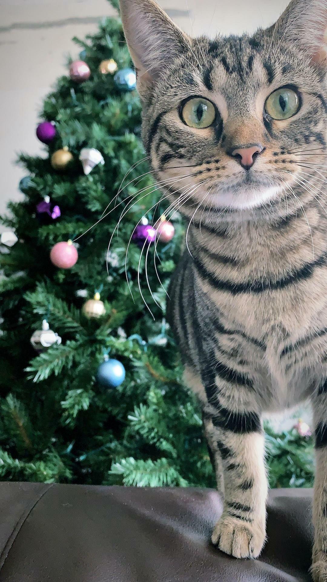 ネコ おしゃれまとめの人気アイデア Pinterest Kenji 猫 動物 ネコ