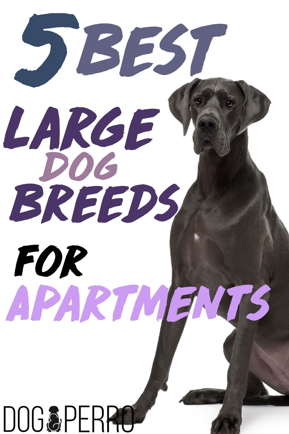 5 Best Large Dog Breeds For Apartments Apartment Dogs Large Dog