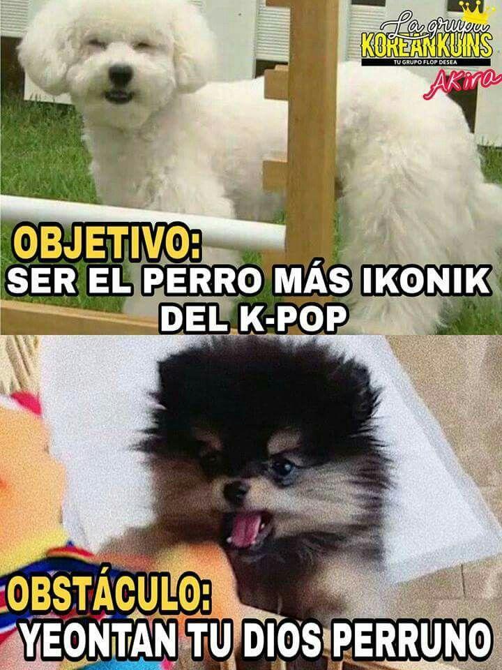 Alguien Me Dice Quien O De Quien Es El Perro Blanco Ambos Son Lindos Memes Divertidos Bts Memes Caras Memes Kpop