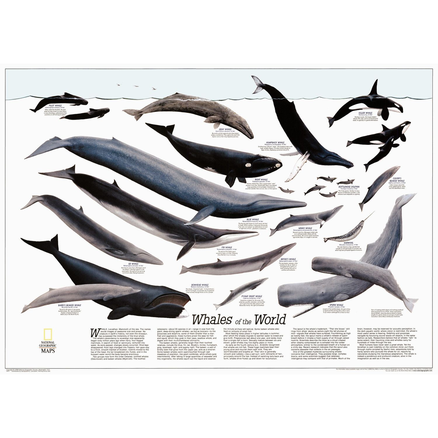 whales of the world poster map re00622012 jpg 1500 1500