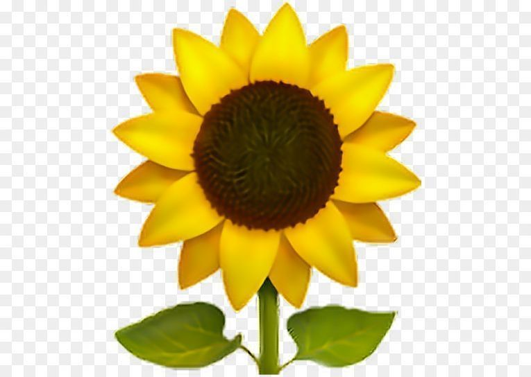Seven Moments That Basically Sum Up Your Yellow Flower Emoji Png Experience Yellow Flower E In 2020 Sunflower Iphone Wallpaper Transparent Flowers Sunflower Wallpaper