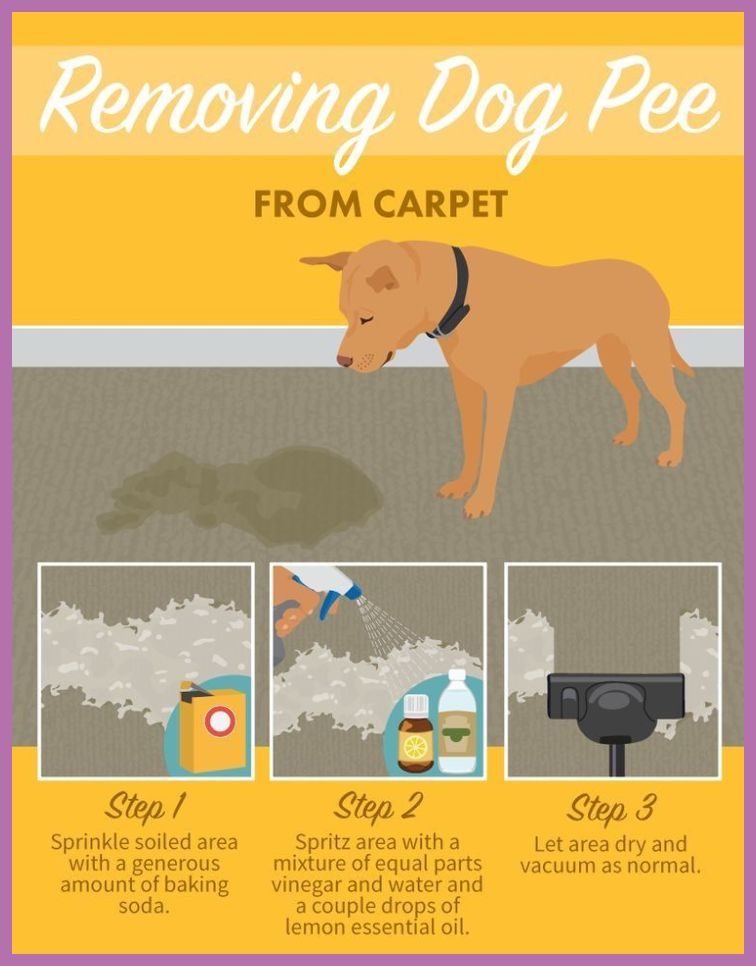 How To Get Rid Of Urine Smell In Carpets Dog Urine Smell Out Of Carpet Old Dog Urine Out Dog Pee Diy Dog Stuff Cleaning Painted Walls