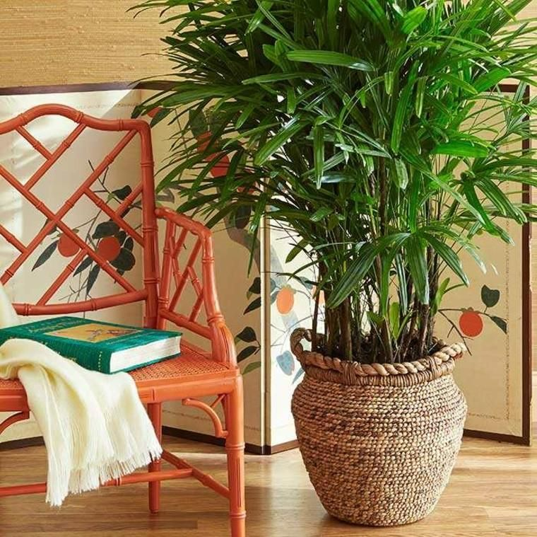 Interior decoration with plants, give yourself well