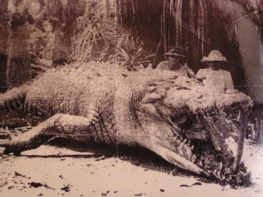 Crocodiles and alligators have no known finite life span, so given the right conditions, they continue to grow