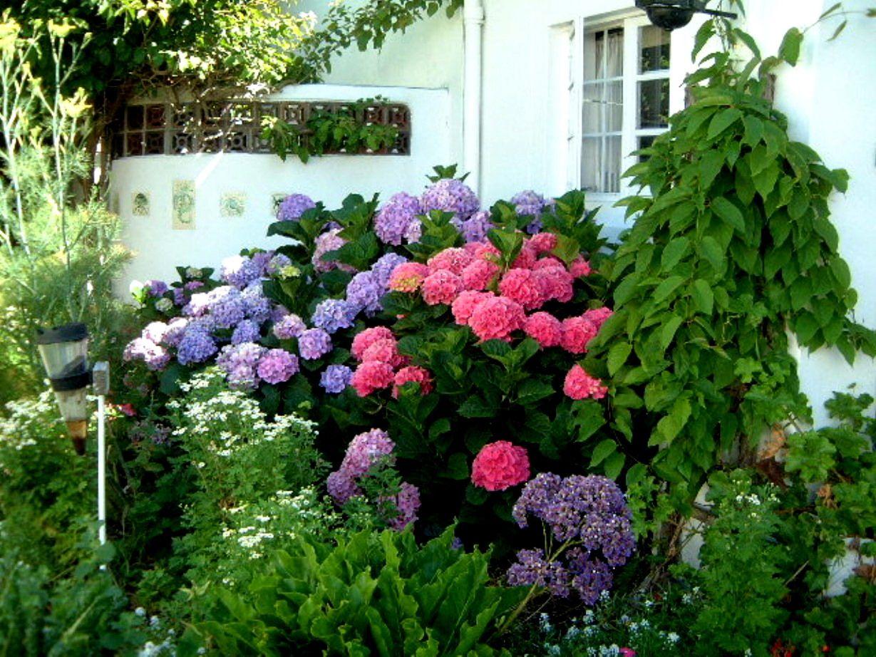 Para cambiar el color de las hortensias :D