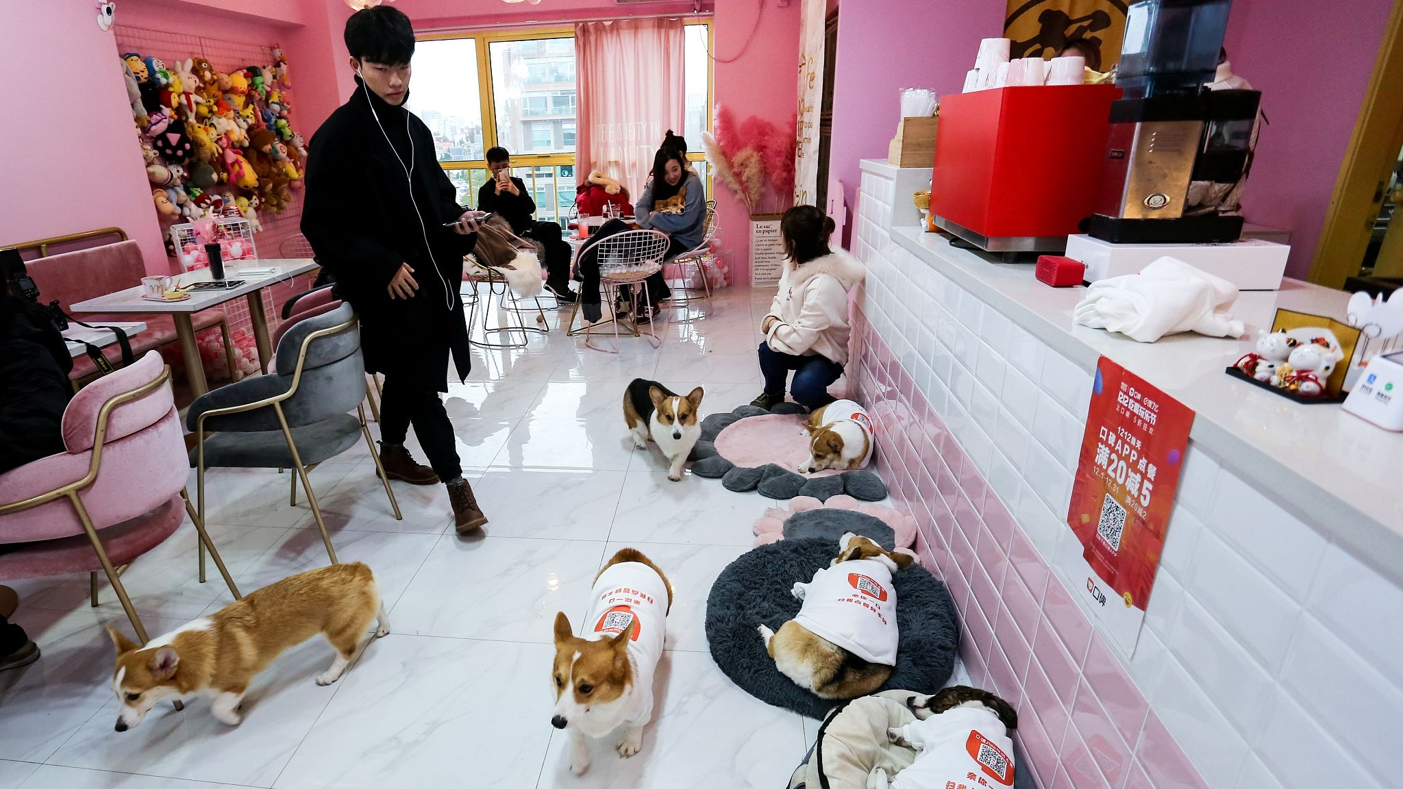 A Dog Cafe In Shanghai Has Employed Six Cute Corgis To Take