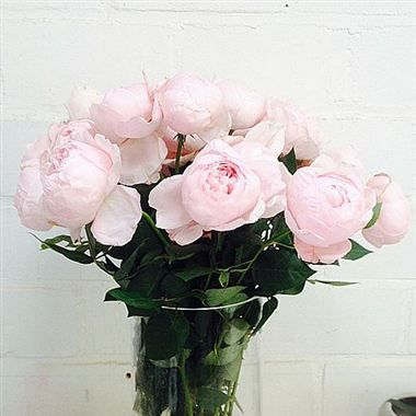 Garden Rose And Peony peony pink garden roses are a premium peony shaped, sweet scented