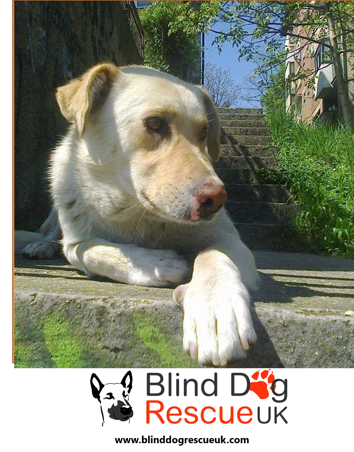 Belkan Is Described As An Absolute Angel Very Sociable Towards People And Other Dogs Despite Suffering Abuse During His Life On The Streets