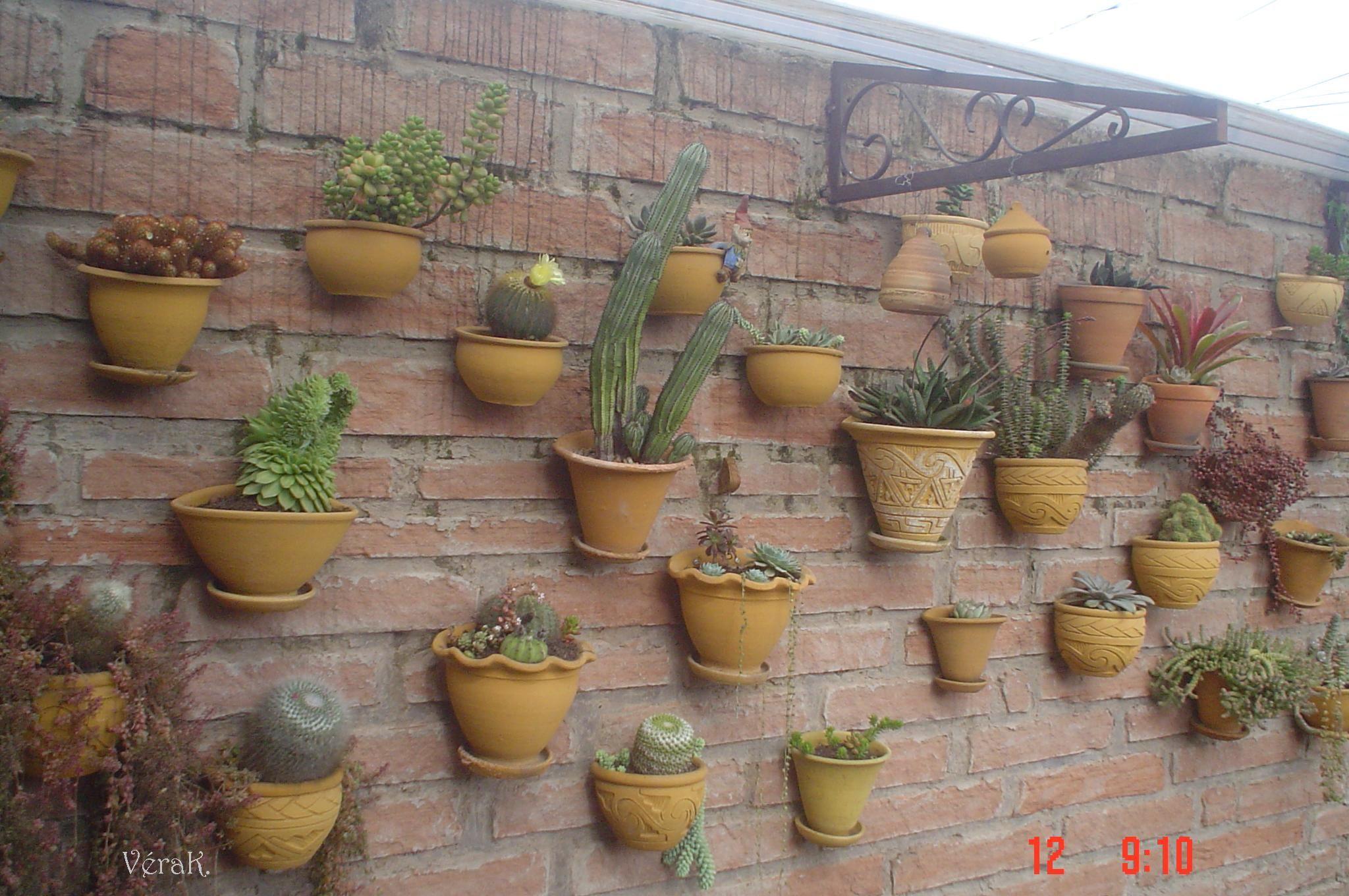 Parede com vasos de cactos e suculentas... (meu jardim ...