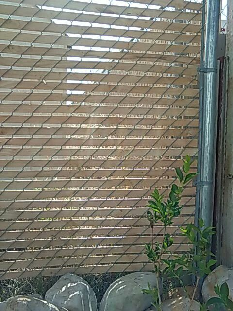 Chain Link Privacy Solution I Have A 2in Mesh Surrounding My Backyard Bought Cedar Lath From Home Depot 50 For 13 88