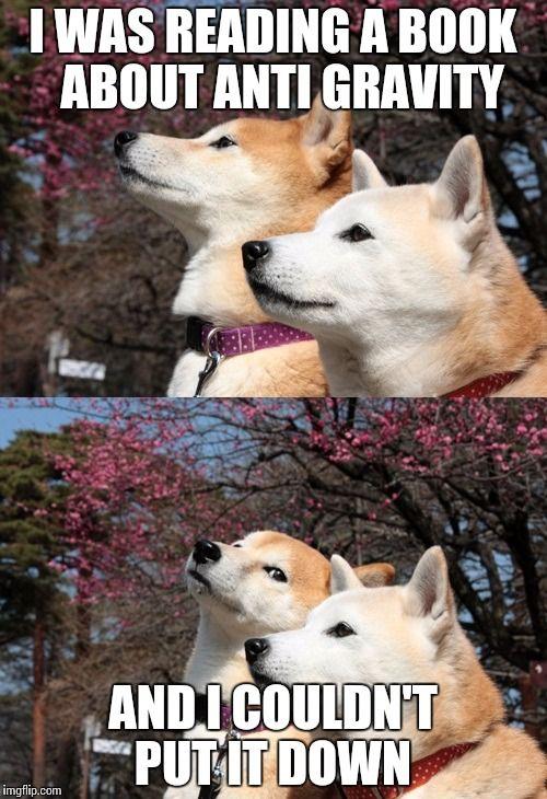 Bad Pun Dogs Dog Jokes Funny Dog Memes Dog Puns
