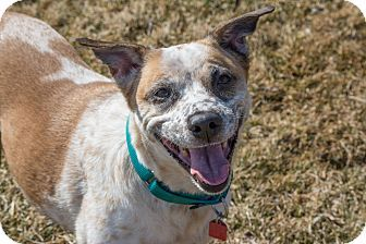 Looking for the perfect family dog? Look no further than Star she is good with dogs, cats, and kids! She loves going for walks outside and playing fetch. Want to learn more about Star? Click her picture and share this post to help Star find her forever home!