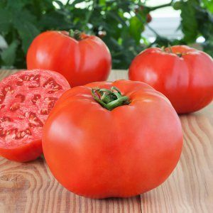 50 Tiny Tim It Grows Only One Foot Tall! Heirloom Vegetable Seeds Tomato