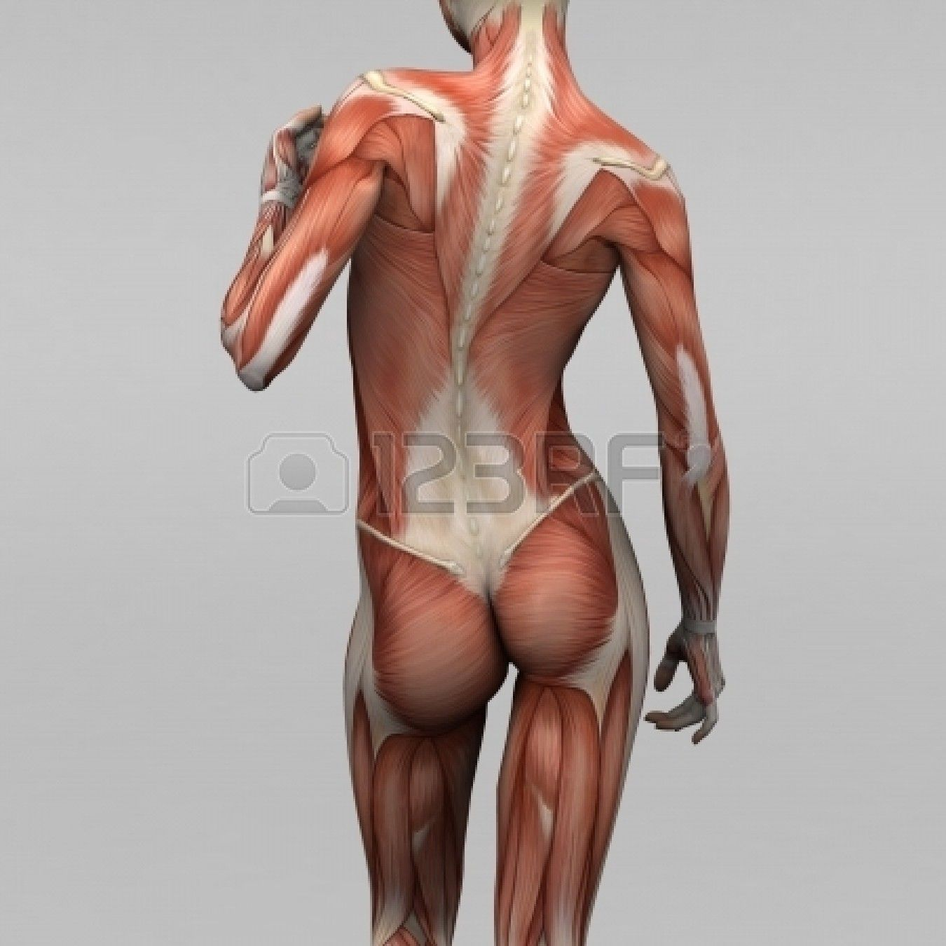 Anatomy Women Google Pinterest Anatomy Body
