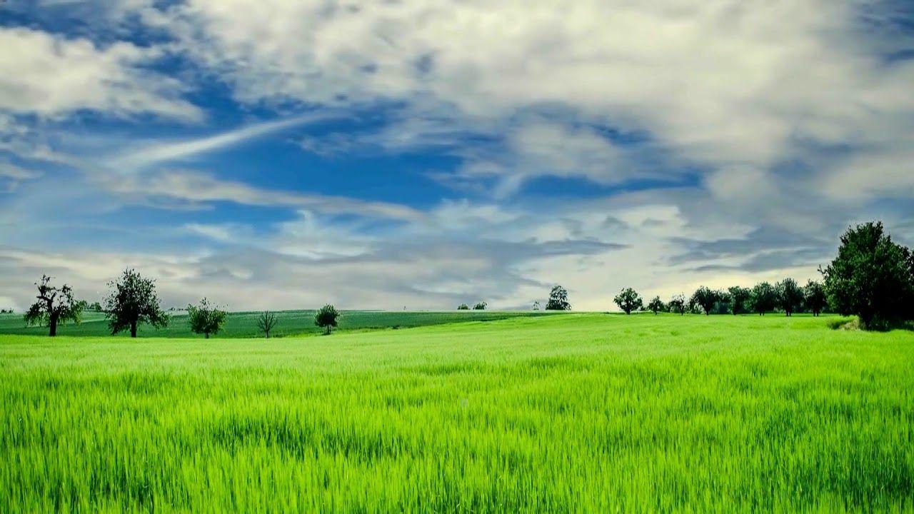 Hd 1080p Nature Grass Field Scenery Video Royalty Free Landscape Video Scenery Greenscreen Grass Field